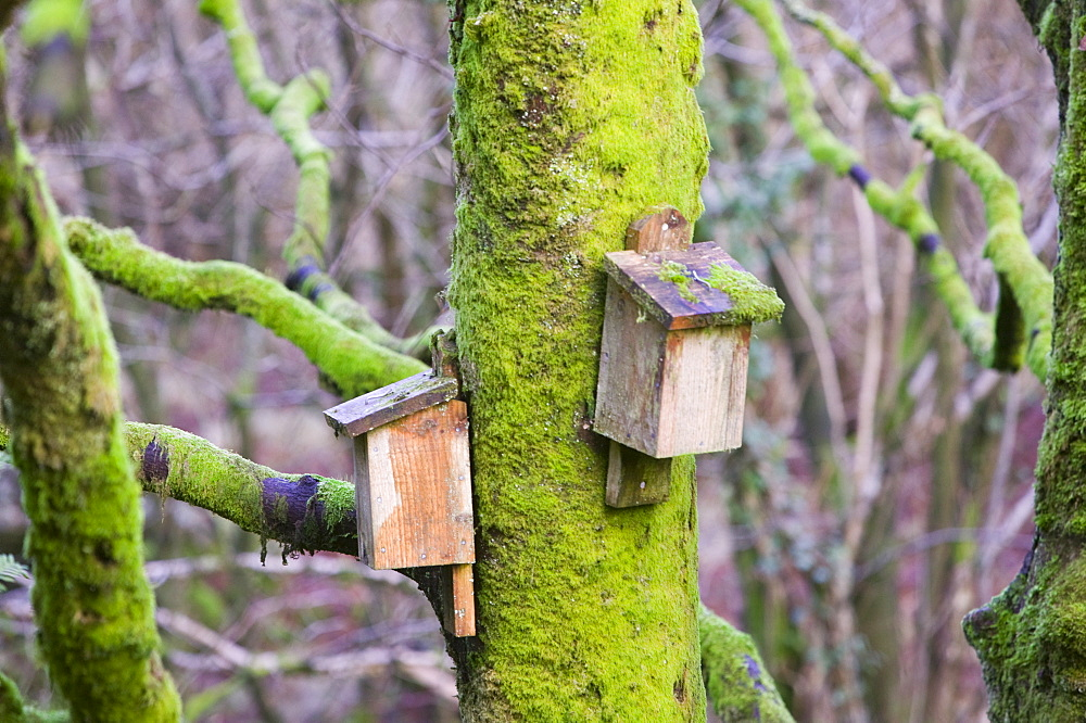 Bat boxs in the Forest of Bowland, Lancashire, England, United Kingdom, Europe