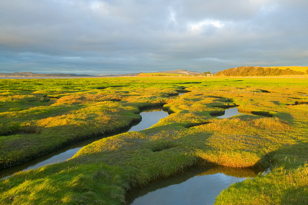 Salt marsh at Hest Bank, Morecambe Bay, Lancashire, England, United Kingdom, Europe