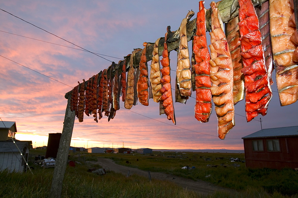 Salmon on traditional Fish drying racks on Shishmaref, a tiny island inhabited by around 600 Inuits, between Alaska and Siberia in the Chukchi Sea, United States of America, North America