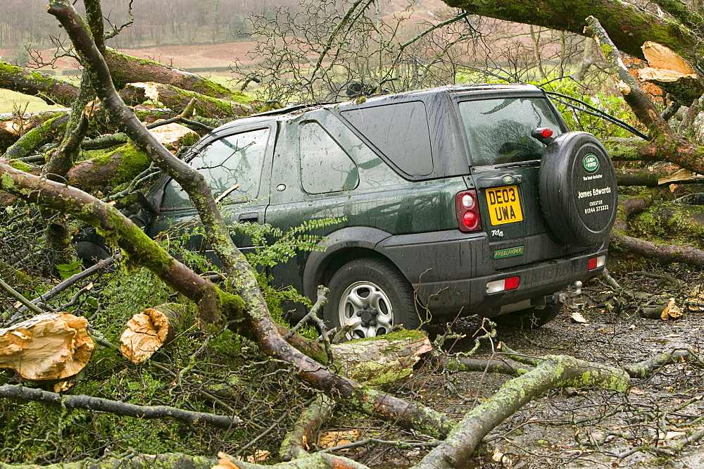 Car beneath fallen branches in January 2005 after a severe storm hit Cumbria, England, United Kingdom, Europe
