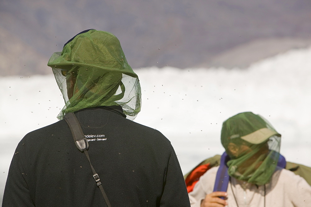 Tourists being attacked by mosquitos in Camp Victor on Greenland, Polar Regions