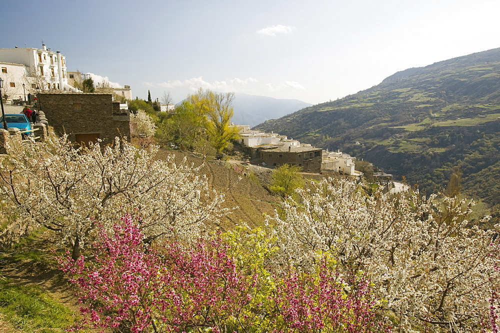 Fruit trees in blossom in Capileira in the Alpujarras, Andalucia, Spain, Europe