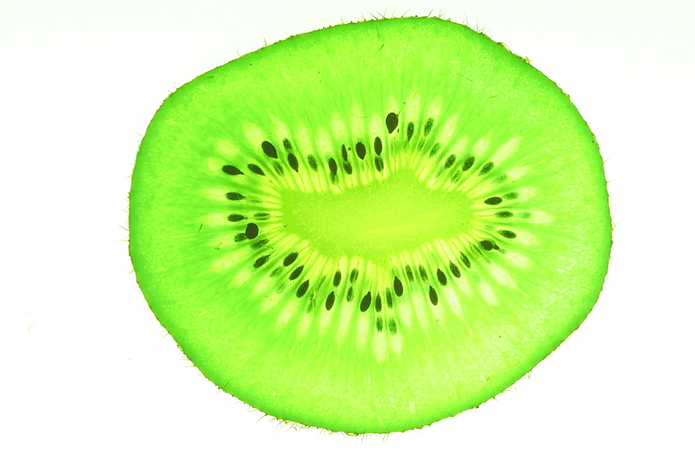 A slice of Kiwi fruit