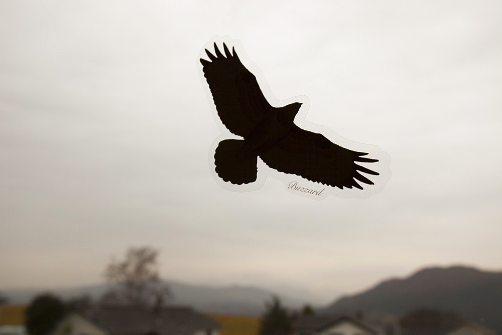 A bird of prey sticker on a window to prevent birds flying into the window
