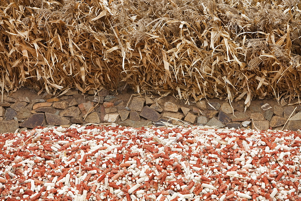 Maize husks that are used as a renewable fuel to burn on household stoves in northern China, Asia