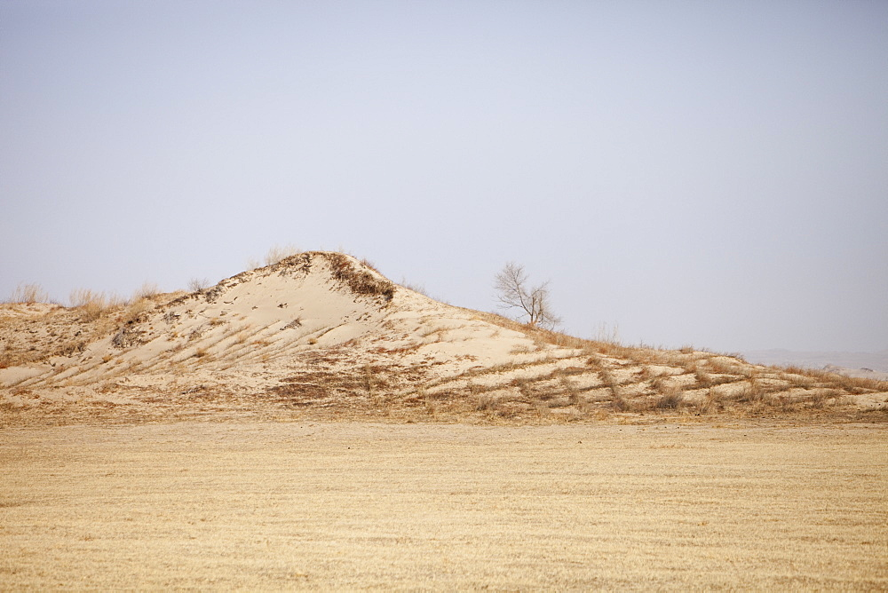 Sand dunes have been planted to try and stabilise them and prevent their spread, Inner Mongolia, Northern China, Asia