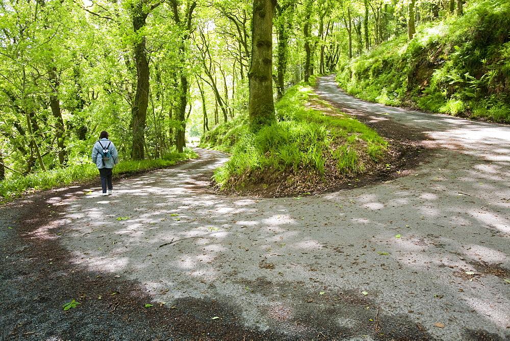 The road down to Woody Bay on the north Devon coast near Lynton, Devon, England, United Kingdom, Europe