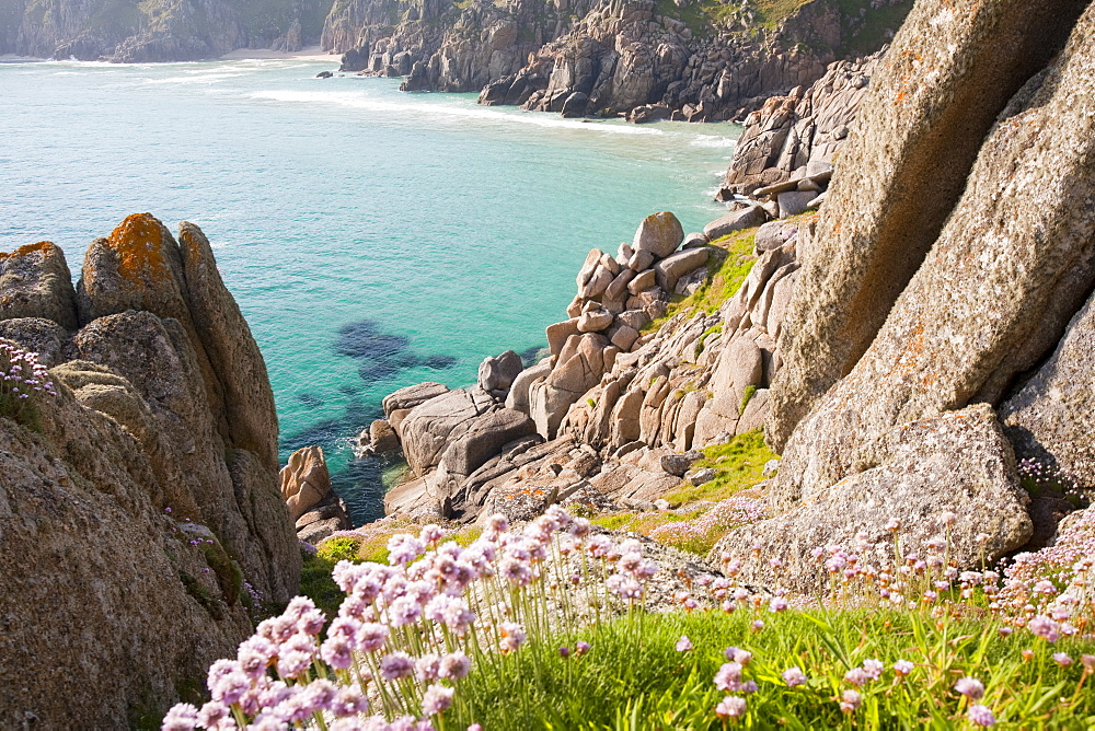 Sea pinks flowreing on Logan Rock Headland in Porthcurno, Cornwall, England, United Kingdom, Europe