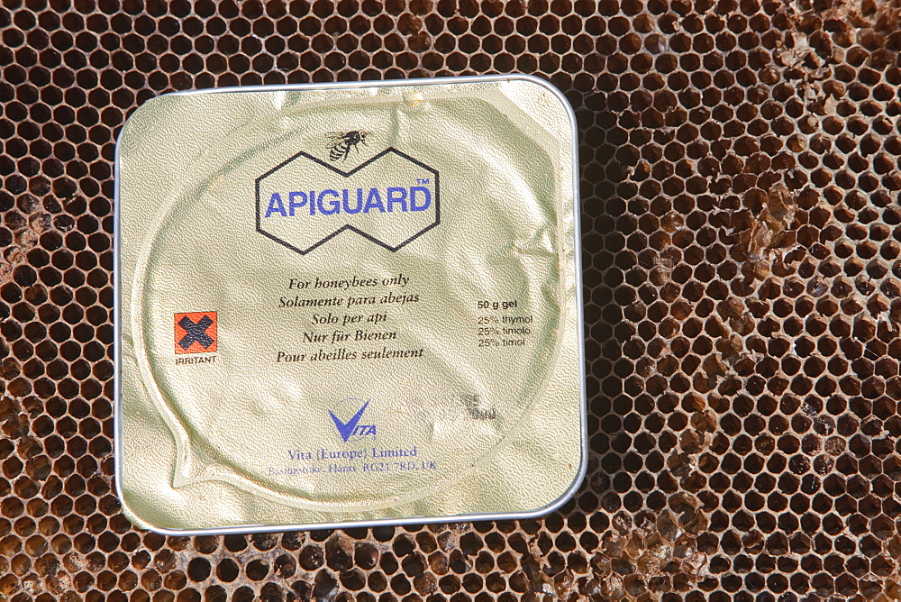 Apiguard being used to combat the Varroa mite in hives in Cockermouth Cumbria, England, United Kingdom, Europe