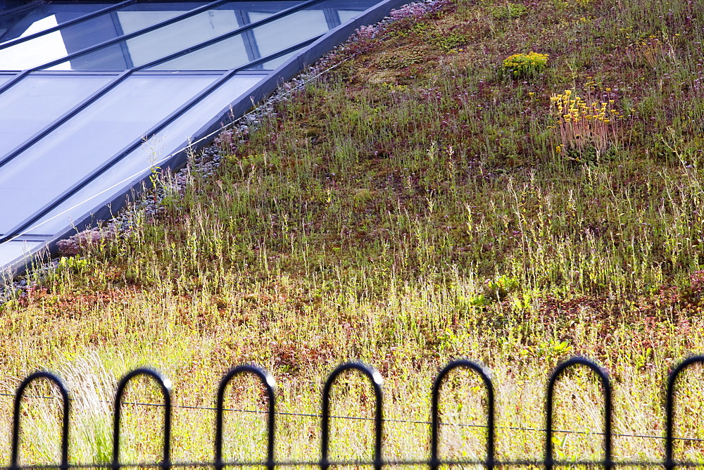 A green roof on Lakeland's flag ship store in Windermere, Cumbria, England, United Kingdom, Europe