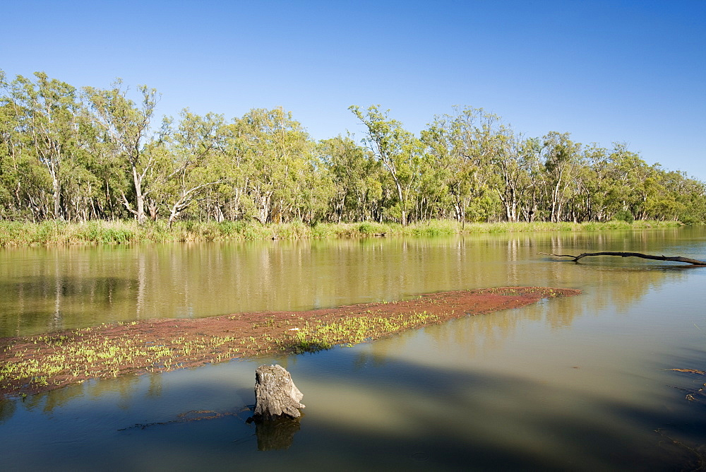The Murray River in the Barmah Forest near Echuca, Victoria, Australia, Pacific
