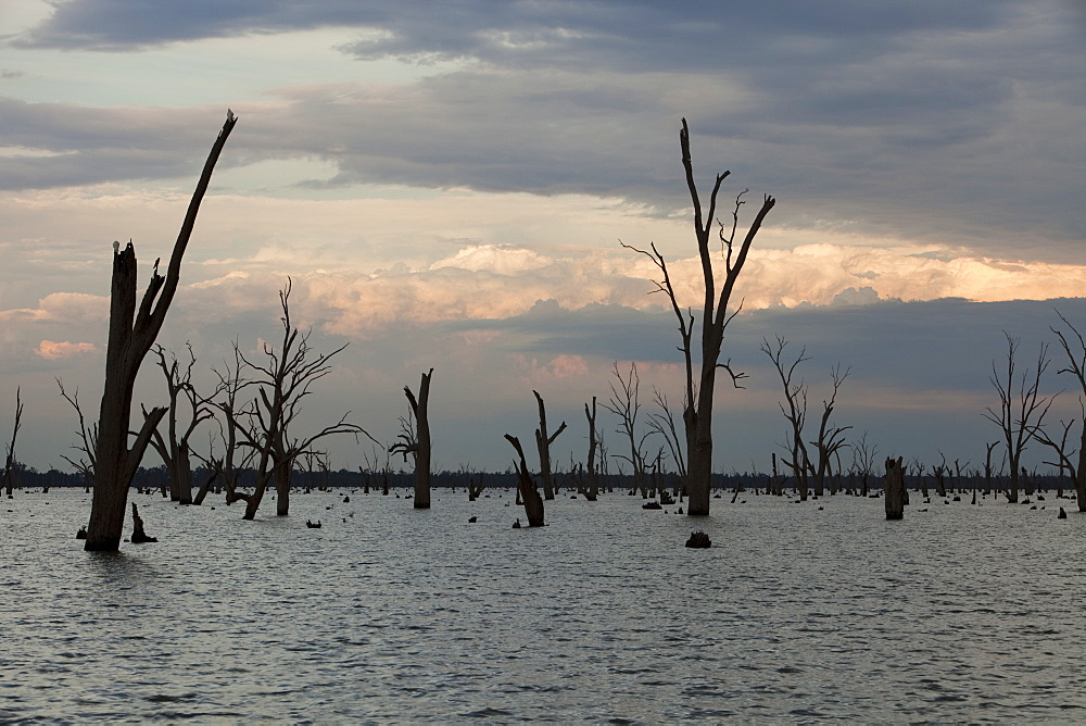 Lake Mulwala at Yarrawonga was created when the Murray River was dammed to provide irrigation water for surrounding farmland, Victoria, Australia, Pacific