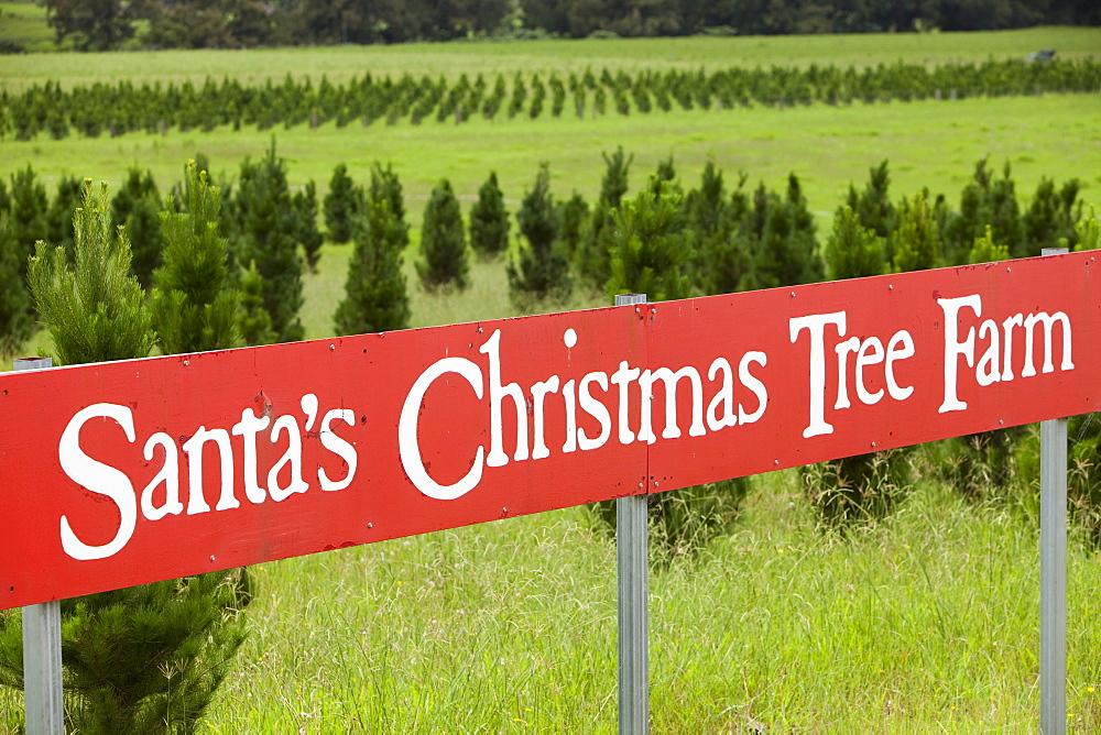 Santas Christmas Tree Farm below the Macquarie Pass National Park in New South Wales, Australia, Pacific