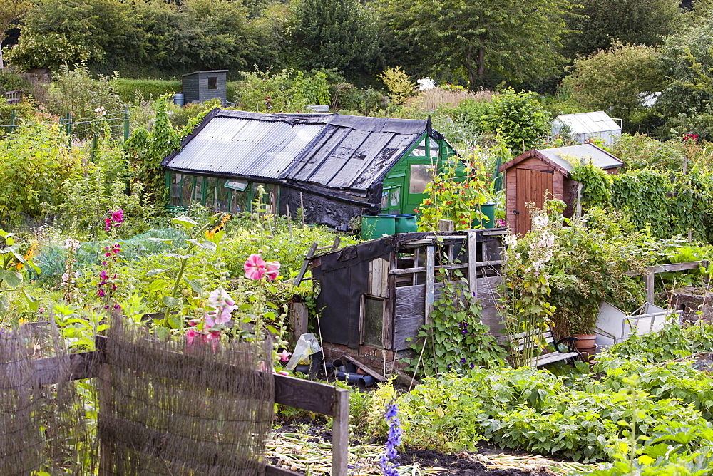 Allotments for growing fruit, vegetables and flowers in Durham, England, United Kingdom, Europe