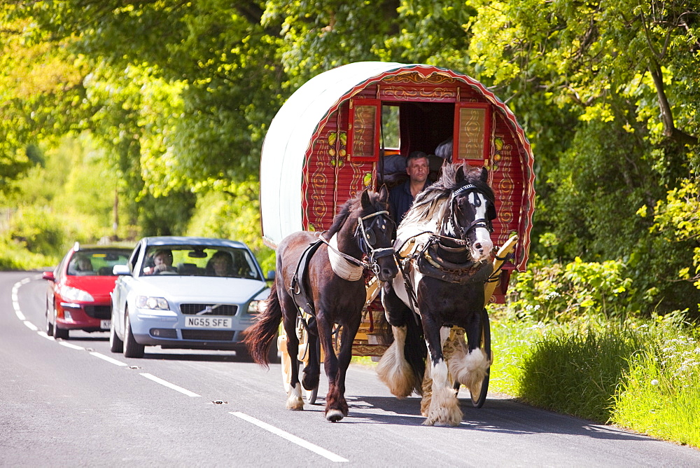 Gipsies travelling towards the Appleby Horse Fair on a horse drawn caravan near Kirkby Lonsdale, Cumbria, England, United Kingdom, Europe