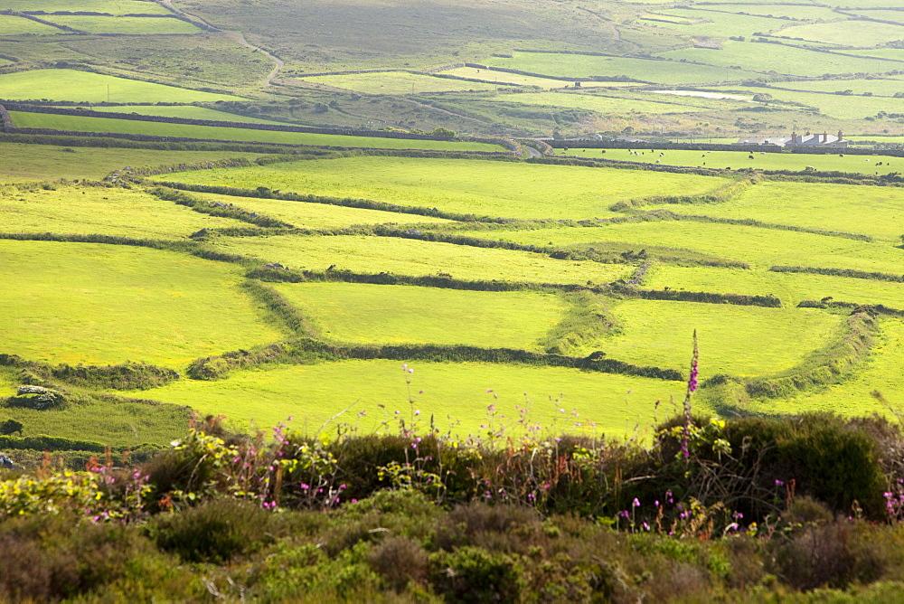 Ancient field boundaries near Bosigran on the Cornish coast, Cornwall, England, United Kingdom, Europe