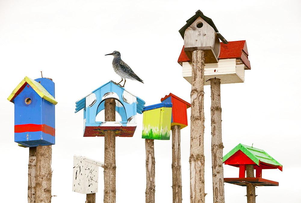 A collection of colourful bird boxes in Hveragerdi, Iceland, Polar Regions