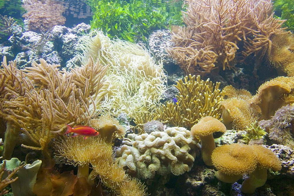 The Deep, Europe's deepest aquarium, Hull, England, United Kingdom, Europe