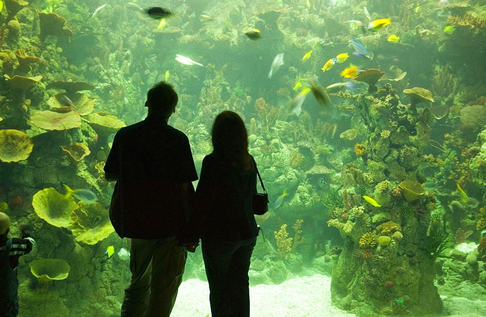 The Deep, Europe's deepest aquarium, Hull, Humberside, England, United Kingdom, Europe