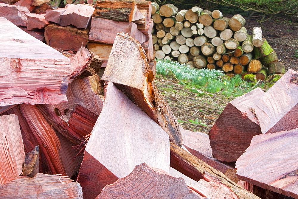 A massive cedar tree is logged up in a garden in Ambleside, Cumbria, England, United Kingdom, Europe