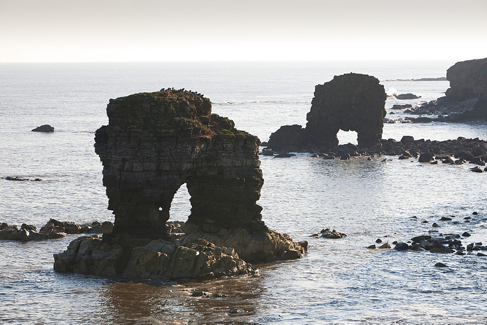 Sea stacks and sea arch on the North East coast at Whitburn, between Newcastle and Sunderland, Tyne and Wear, England, United Kingdom, Europe