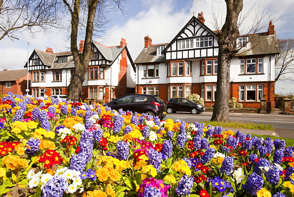Spring flower bed in front of expensive detached houses in Carlisle, Cumbria, England, United Kingdom, Europe
