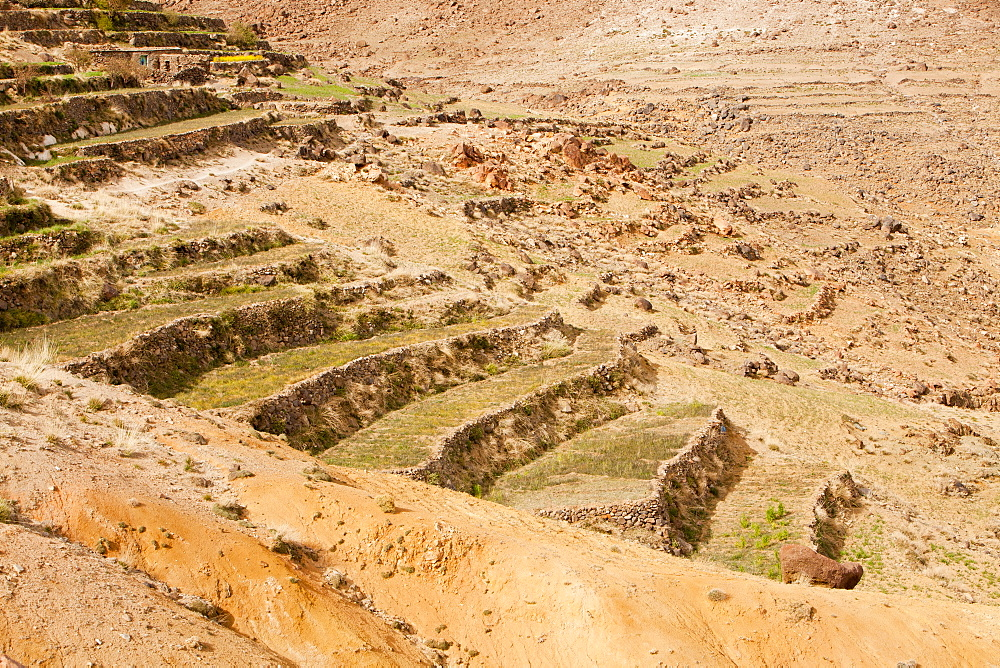 Field terraces above a Berber village in the Anti Atlas mountains of Morocco, North Africa, Africa