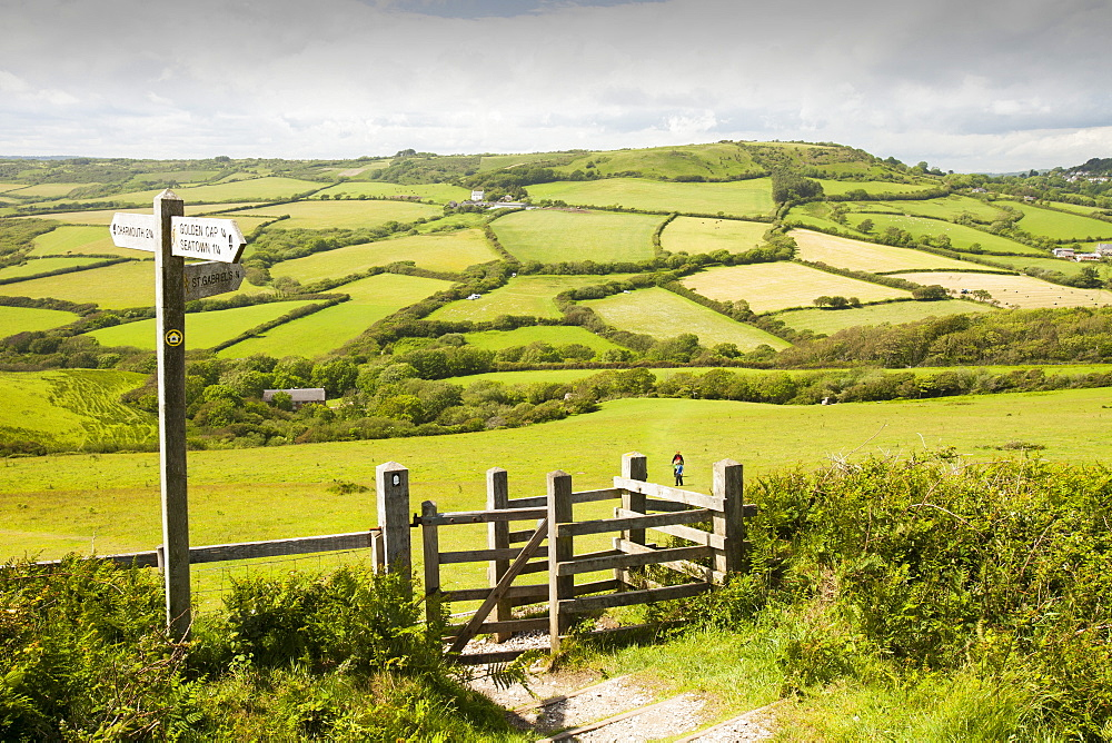 A section of the South West Coast Path near Charmouth in Dorset, England, United Kingdom, Europe