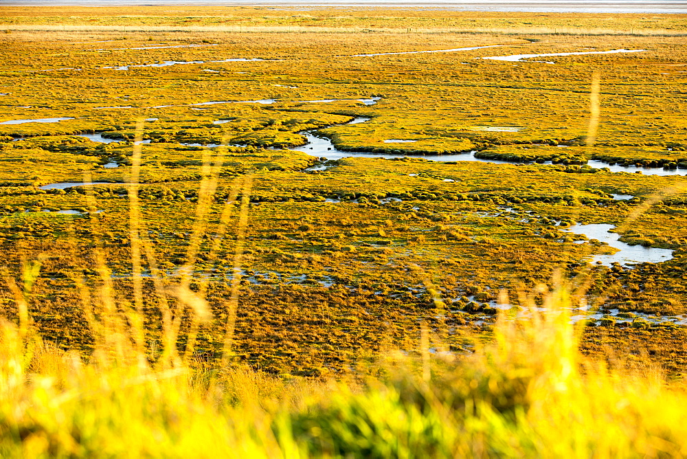 The salt marsh (Merse) at Caelaverock on the Scottish side of the Solway Firth, Scotland, United Kingdom, Europe