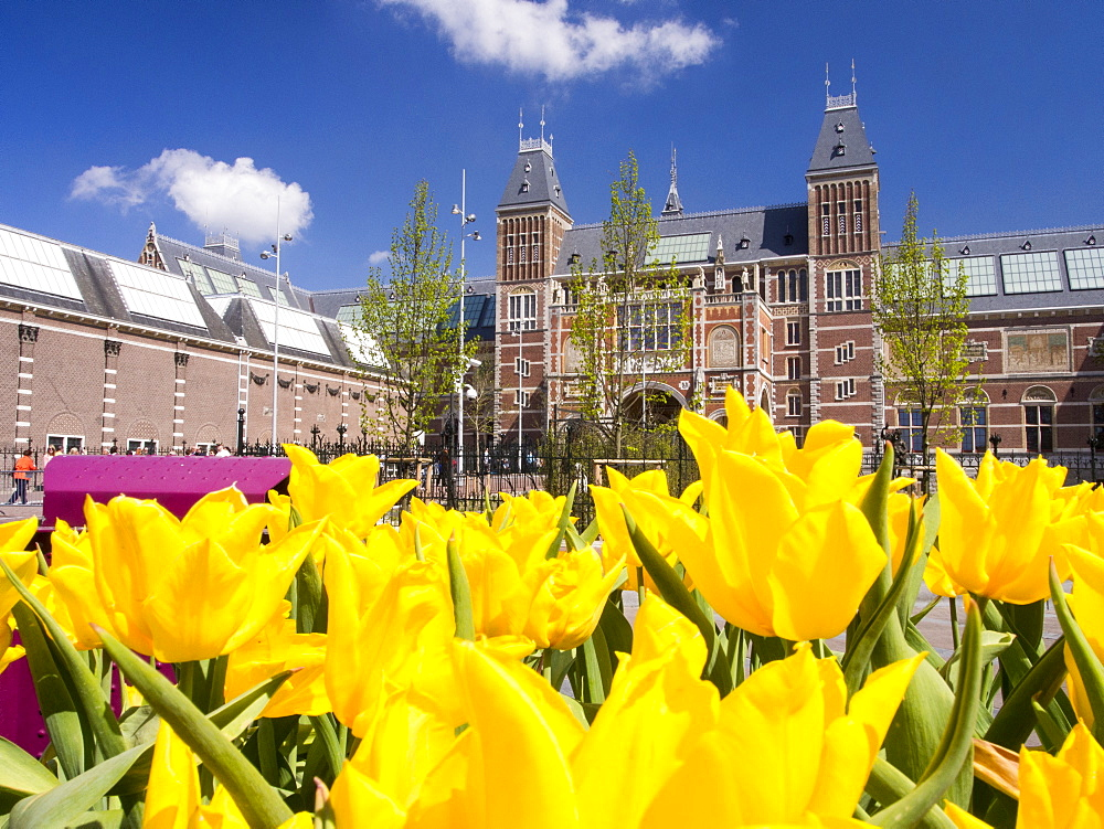 The famous Rijksmuseum in Amsterdam, Netherlands, Europe