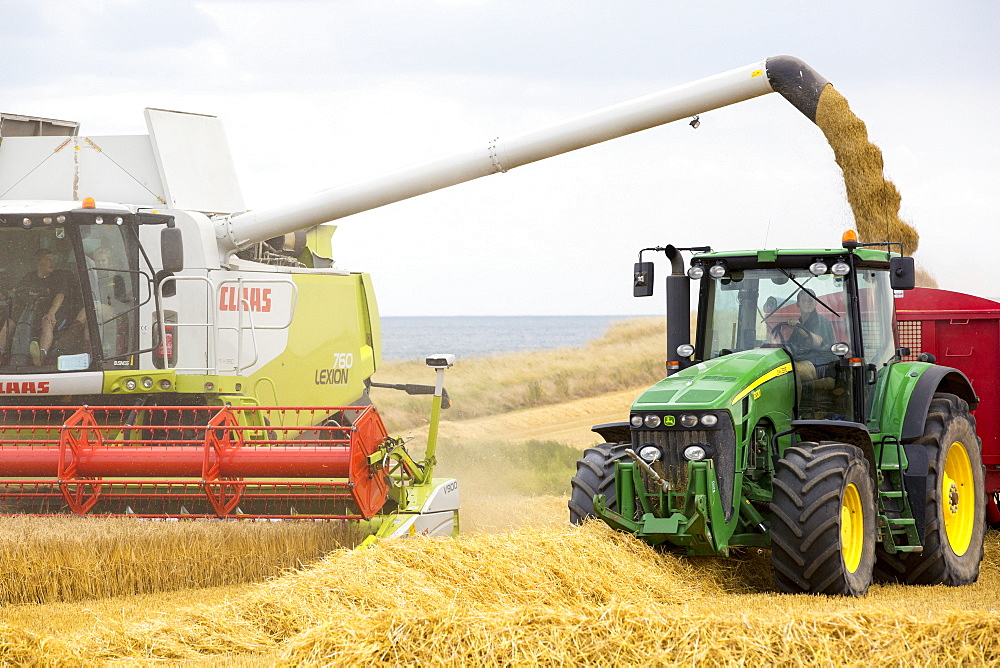 A farmer harvesting wheat on a farm near Barmston, East Coast, Yorkshire, UK.