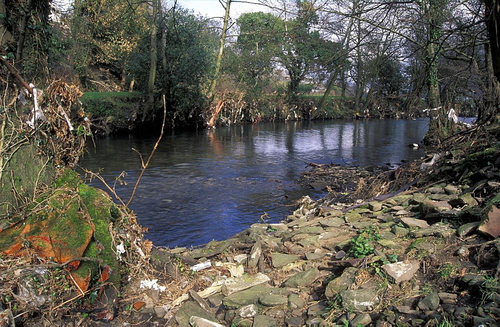Plastic debris trapped in riverside branches, Afon Rhymney, Machen, Wales