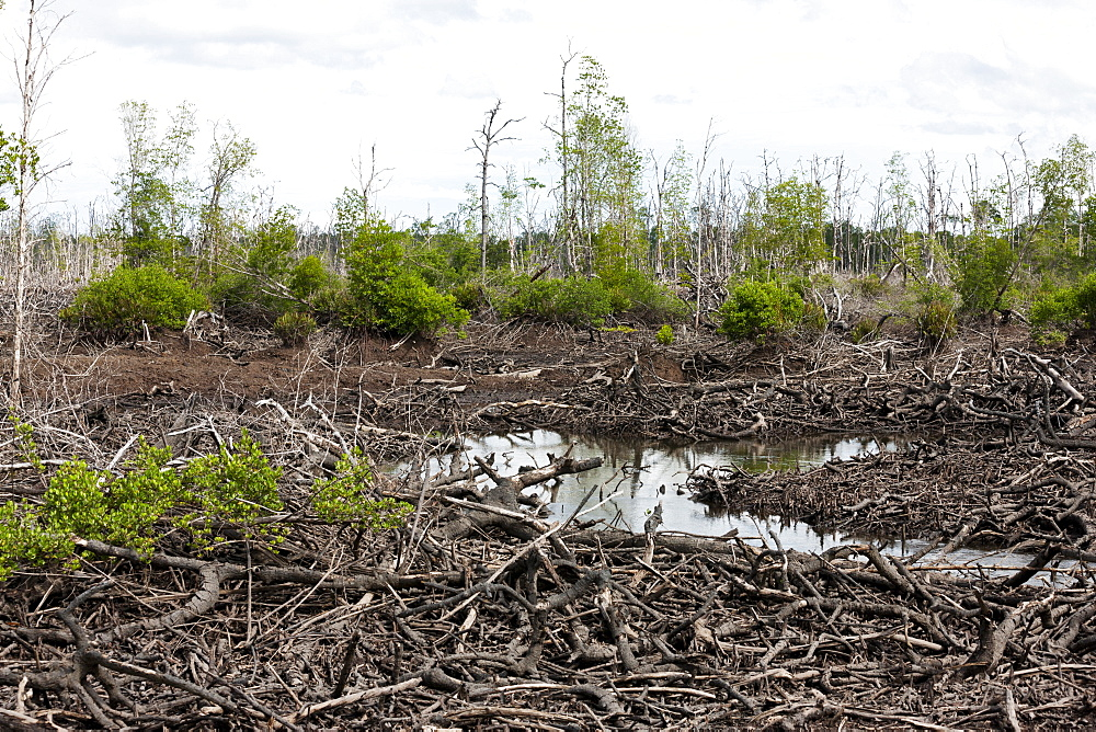 Pond intended for shrimp farm although non-productive in vast area of devastated mangroves, Balikpapan Bay, East Kalimantan, Borneo, Indonesia, Southeast Asia, Asia - 918-18
