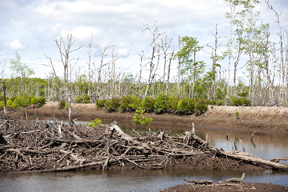 Pond intended for shrimp farm although non-productive in vast area of devastated mangroves, Balikpapan Bay, East Kalimantan, Borneo, Indonesia, Southeast Asia, Asia - 918-20