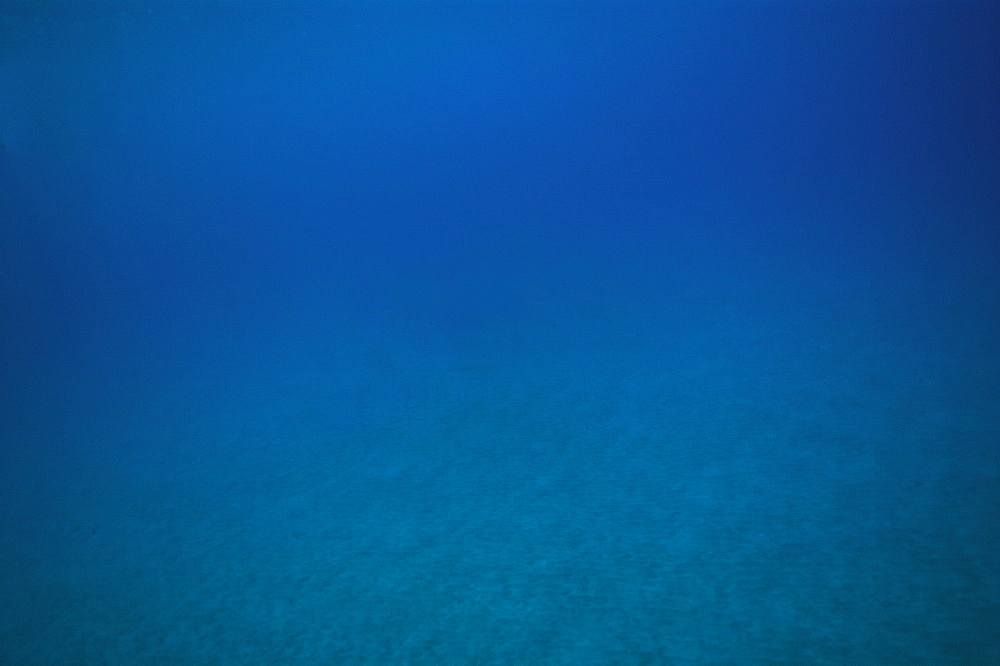 Underwater scenic, Big Island, Hawaii, United States of America, Pacific