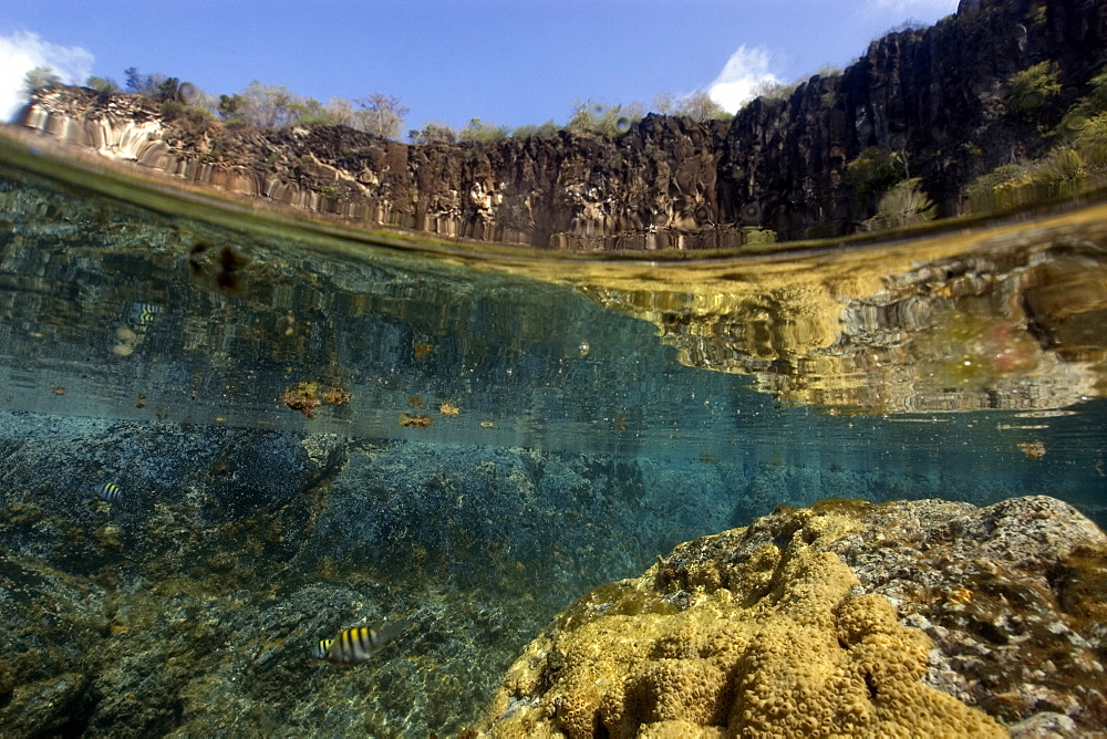 Cliffs and massive colony of great star coral (Montastrea cavernosa), in shallow tide pool, Porco's Bay, Fernando de Noronha, UNESCO World Heritage Site, Brazil, South America