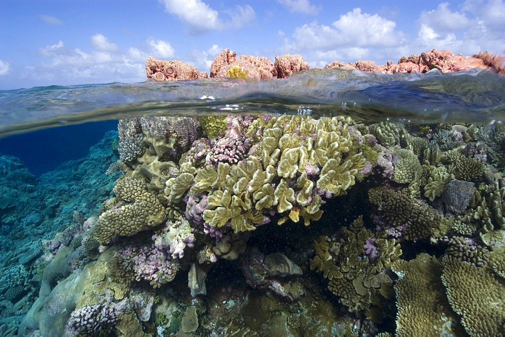 Split image of pristine coral reef and sky, Rongelap, Marshall Islands, Micronesia, Pacific