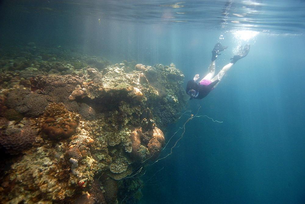 Snorkeller observes diverse coral reef, Rock Islands, Palau, Caroline Islands, Micronesia, Pacific Ocean, Pacific