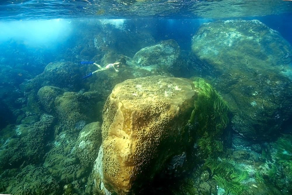 Snorkeller dives down to observe the substrate, St. Peter and St. Paul's rocks, Brazil, South America - 920-1725