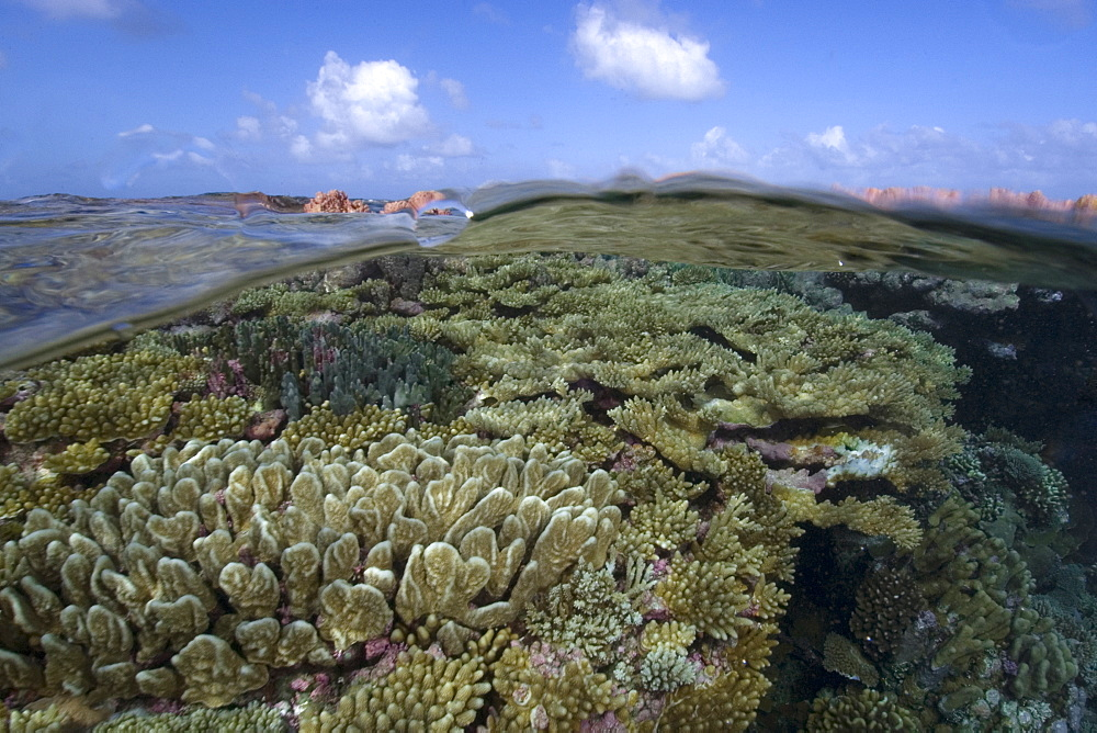 Split image of pristine coral reef and  sky, Rongelap, Marshall Islands, Micronesia, Pacific - 920-18