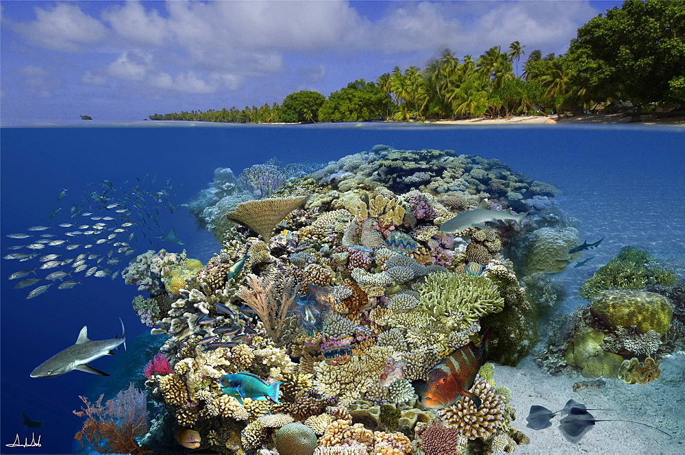 Digital composite of tropical coral reef environment