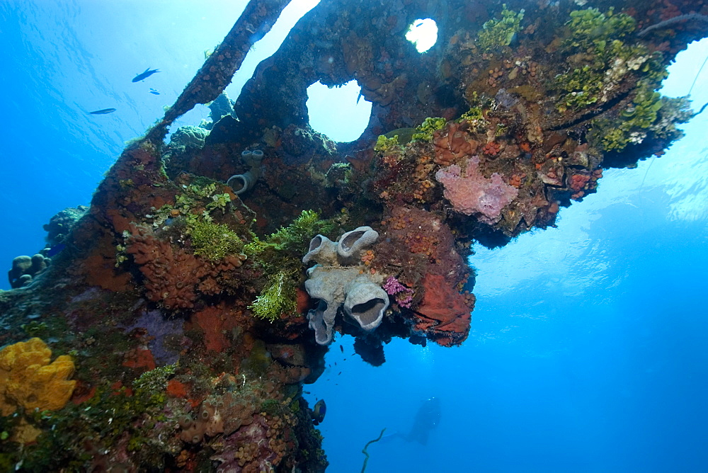 Sponges, algae and corals growing over the external structure of the Fujikawa Maru, Truk lagoon, Chuuk, Federated States of Micronesia, Caroline Islands, Micronesia, Pacific Ocean, Pacific