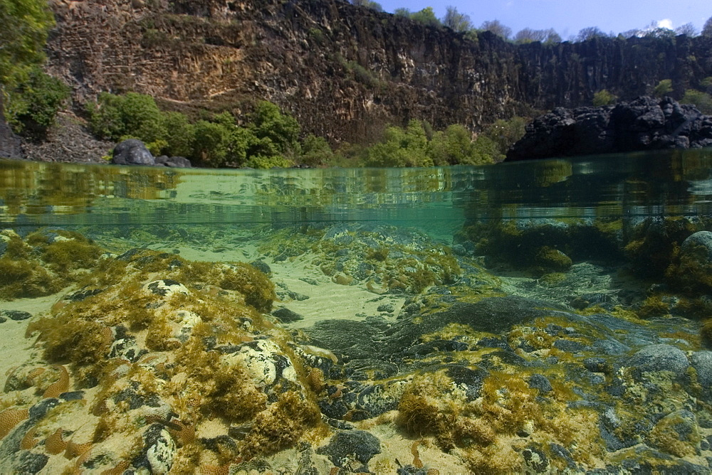 Shallow tide pool, split level, Fernando de Noronha, Pernambuco, Brazil, South America