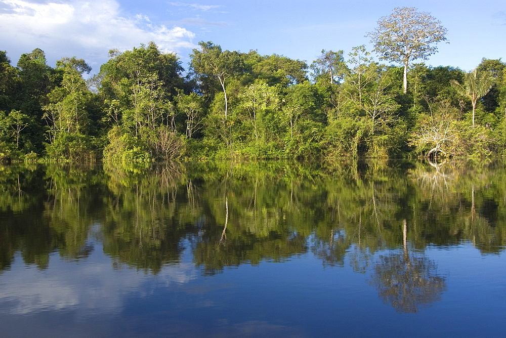 Flooded tropical rain forest, Mamiraua sustainable development reserve, Amazonas, Brazil, South America