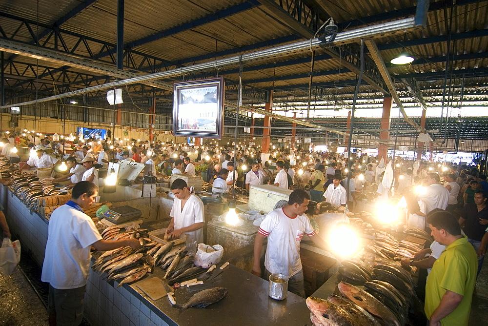 Freshwater fish including black tambaqui (Colossoma macropomum) for sale at riverside fish market, Manaus, Amazonas, Brazil, South America