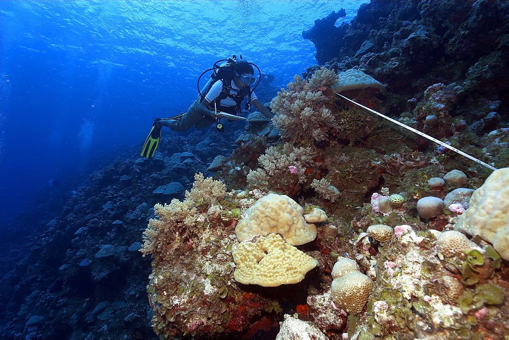 Diver conducts reef survey, Ailukatoll, Marshall Islands, Pacific