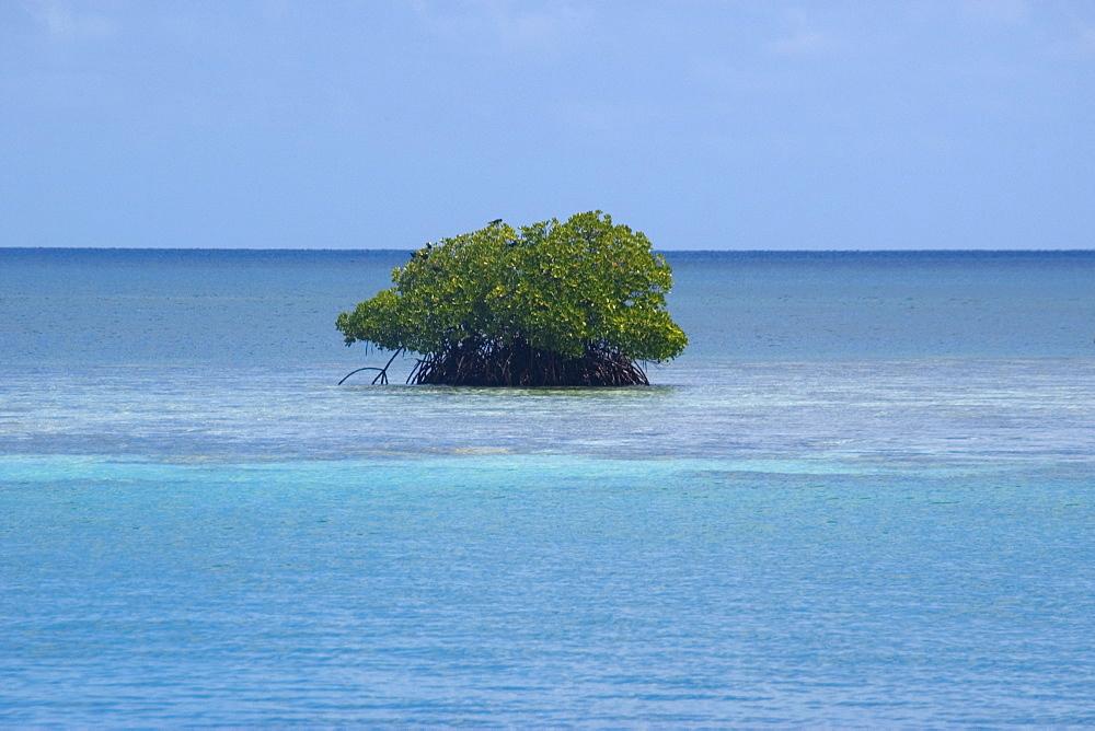 Mangrove in Truk lagoon, Chuuk, Federated States of Micronesia, Caroline Islands, Micronesia, Pacific Ocean, Pacific