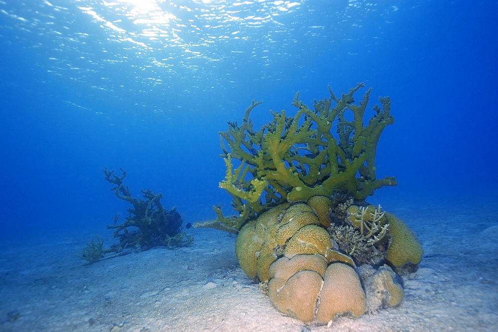 Coral bommies in sandy substrate, Rongelap, Marshall Islands, Micronesia, Pacific