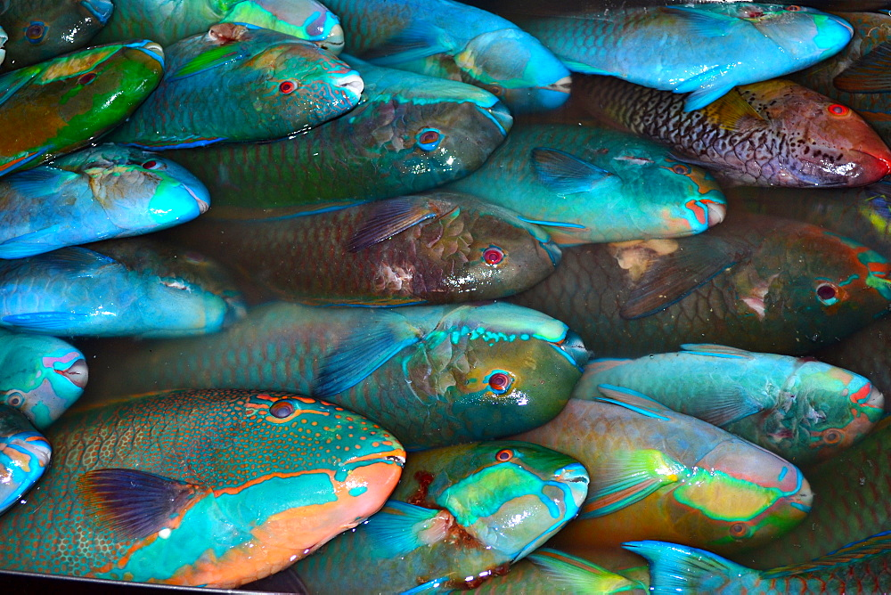 Parrotfish for sale at local market, Pohnpei, Federated States of Micronesia, Caroline Islands, Micronesia, Pacific Ocean, Pacific