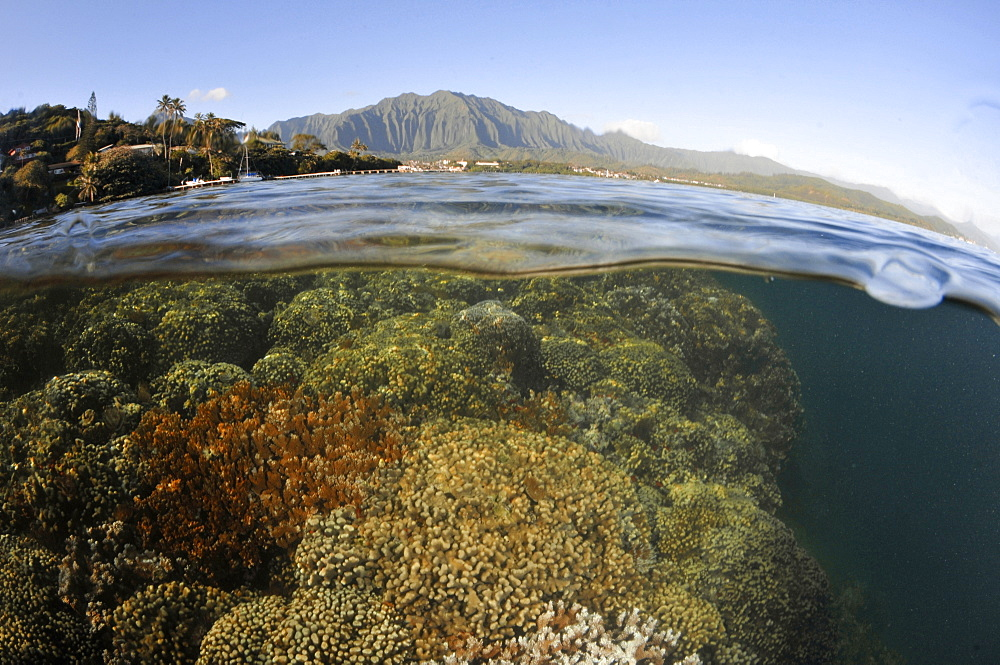 Split image of hard coral formations near the coast and the Koolau mountains in the background, Kaneohe Bay, Oahu, Hawaii, United States of America, Pacific